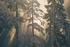 Free Tree, Winter, Frost, Sky Royalty Free Stock Photography - 101930557