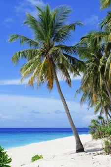 Free Tropics, Sky, Caribbean, Palm Tree Stock Images - 101935434