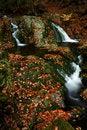 Free Autumn Stream In Giant Mountains Royalty Free Stock Photo - 1025045