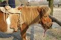 Free Ride Pony Stock Photography - 1029872