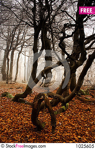 Winter begins in forest Stock Photo