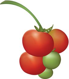 Free Tomato Plant Fruits Stock Images - 1021774