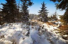 Free Winter Landscape Royalty Free Stock Image - 1021896