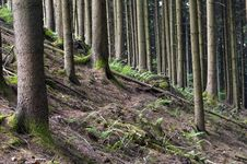 Free Forest Stock Photos - 1022283
