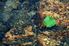 Free River Leaf Royalty Free Stock Image - 1022306
