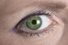 Free Green Eye Looking At You Royalty Free Stock Photos - 1023208