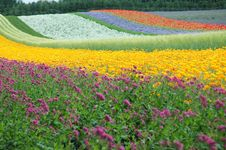 Free The Multicoloured Road Stock Photo - 1023270