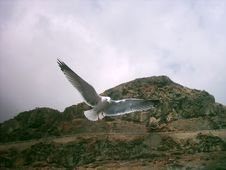 Free Soaring Seagul In Flight Stock Photo - 1023550