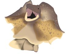 Frilled-neck Lizard Royalty Free Stock Photo
