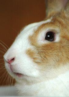 Free Bunny Royalty Free Stock Photos - 1025548