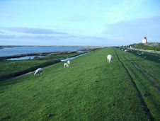 Free Dike With Lighthouse And Sheeps Stock Image - 1025621