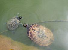 Free Turtles Royalty Free Stock Image - 1025976