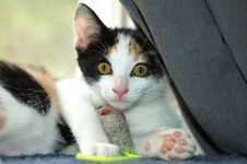 Free Kitten Surprise Stock Image - 1026081