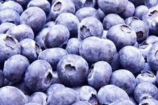 Free Fresh Blueberries Royalty Free Stock Photography - 1027037