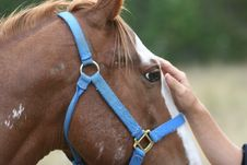 Free Human And Horse. Stock Images - 1028144