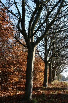 Free Danish Landscape01 Royalty Free Stock Photo - 1028385