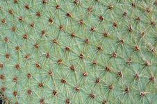 Free Cactus Royalty Free Stock Photos - 1028818