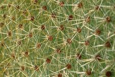 Free Cactus Stock Photo - 1028820