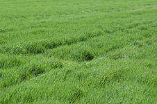 Free Diagonal In Grass Stock Image - 1028961