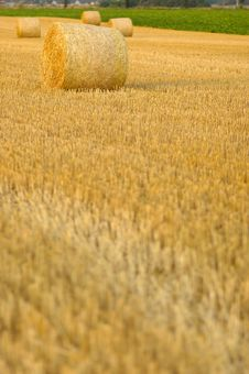 Free Harvest Time Stock Photo - 1029640