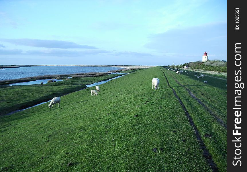 Dike with lighthouse and sheeps