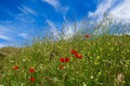 Free Poppies And Straws Royalty Free Stock Photos - 10205488