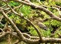 Free Black Crowned Heron Stock Image - 10205851