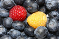 Free Blueberries With One Red And One Yellow Berry Stock Photos - 10207013