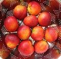 Free Nectarines Stock Image - 10209381