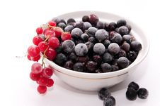Frozen Red And Black Currants Royalty Free Stock Images