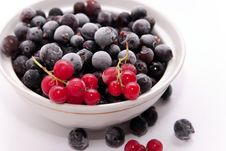 Frozen Red And Black Currants Royalty Free Stock Photos