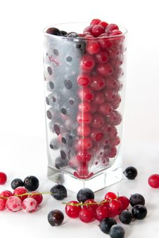 Mix With Frozen Red And Black Currants Stock Images