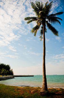 Free Lone Coconut Tree Royalty Free Stock Photography - 10201717