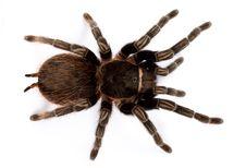 Free Spider Stock Photo - 10203550
