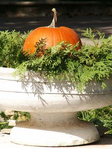 Free Pumpkin In A Planter Stock Photography - 10203872