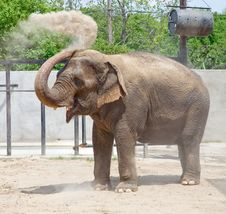 Free Elephant Royalty Free Stock Photography - 10204097