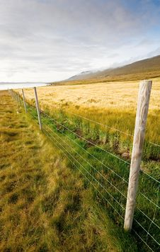 Free Wheat Field With Fence Royalty Free Stock Images - 10205689