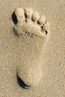 Free Footprint In The Sea Sand Royalty Free Stock Photography - 10206027