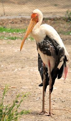 Free Painted Stork Stock Image - 10206131