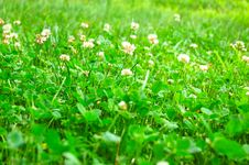 Free Fresh Green Grass Royalty Free Stock Images - 10207319