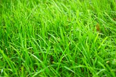 Free Fresh Green Grass Stock Photo - 10207320