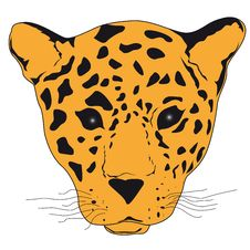 Free Leopard Stock Photo - 10207840