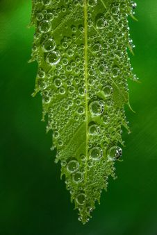 Green Leaf Bubbles Stock Photos