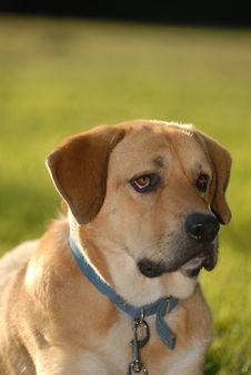 Free Puppy Dog Eyes Royalty Free Stock Image - 10208576