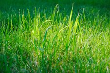 Free Fresh Green Grass Stock Image - 10209511