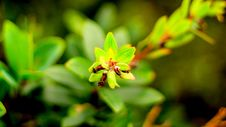 Free Plants In The Mountains Royalty Free Stock Photography - 102062717