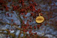 Free Branch, Rowan, Tree, Autumn Royalty Free Stock Images - 102063949