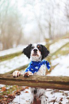 Free Dog, Dog Breed, Winter, Snow Stock Photos - 102064023