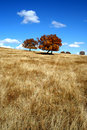 Free Light Track On The Vast Grassland In Autumn Stock Photos - 10214623