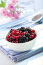 Free Redcurrants And Blackberries Royalty Free Stock Photos - 10215208